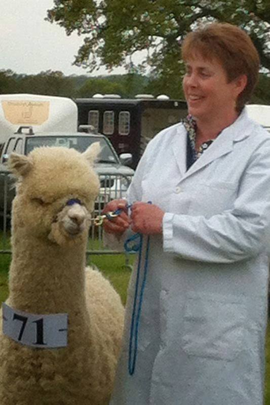Humdinger wins his class at the North Somerset